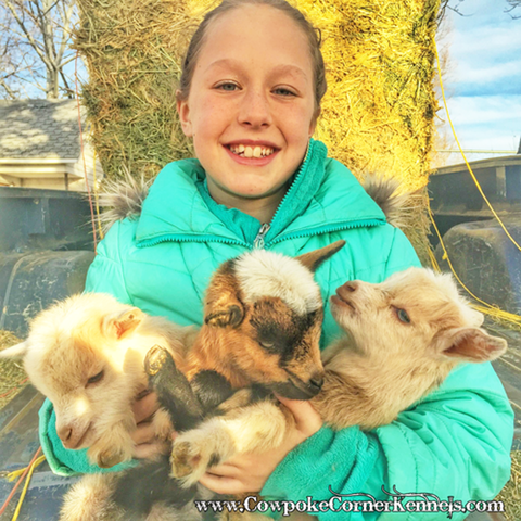 Addie-and-baby-goats