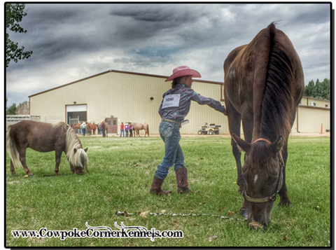 At-the-county-fair-horse-show