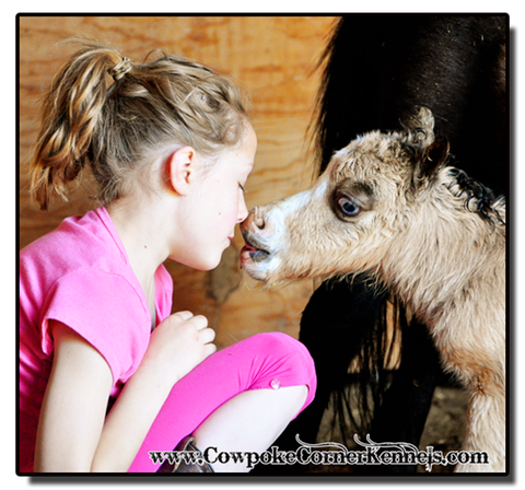 Baby-miniature-horse-kisses