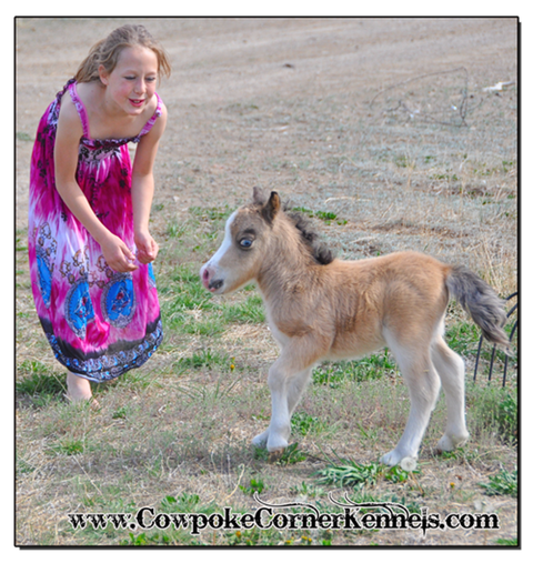 Baby-Miniature-horse 0889