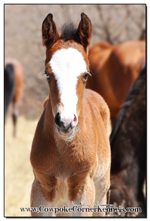 Bay-bucking-horse-filly 0077