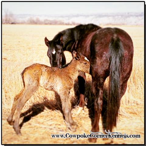 Birthday-surprise-foal 0881