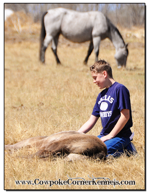 Black-foal-and-kid 0052