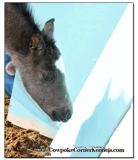 Blue-filly 0085
