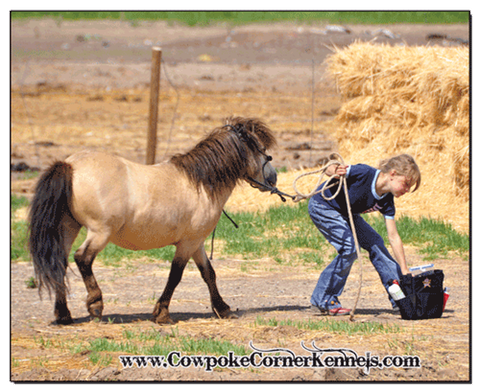 Buckskin-mini-pony 0050