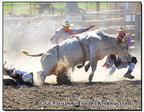Bull-fighting 0802