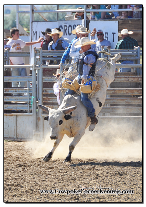 Bull-riding-rodeo 0744