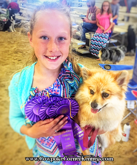 County-Fair-Dog-show