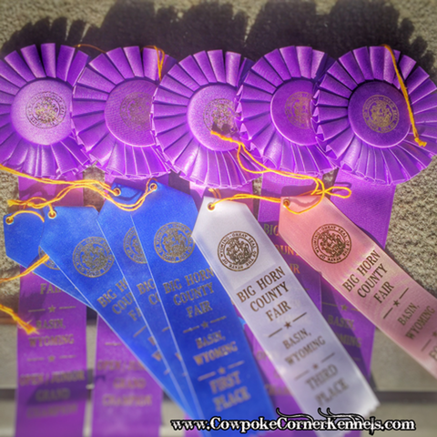 county-fair-ribbons
