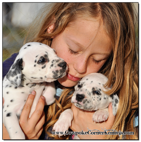 Cuddly-Dalmatian-puppies 1513