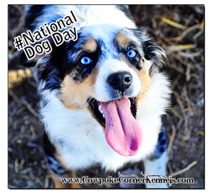 Fancy-National-Dog-Day 0830