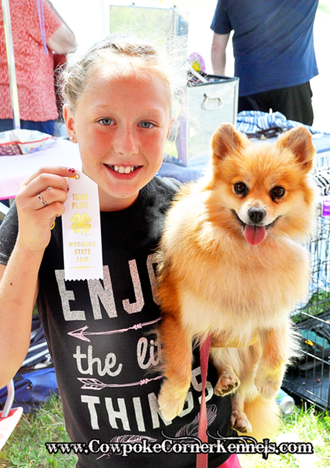 first-state-fair-ribbon