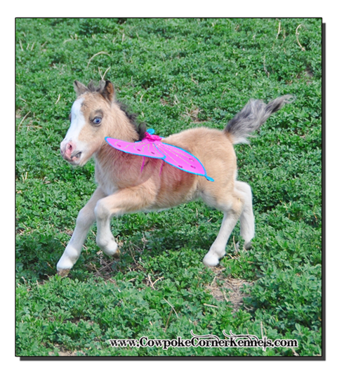 Flying-baby-mini-horse 0846