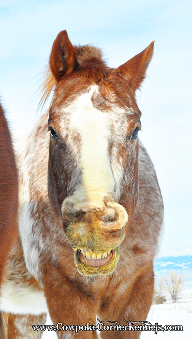 Funny-face-horse 0996