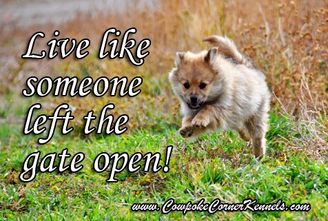 live like someone left the gate open copy