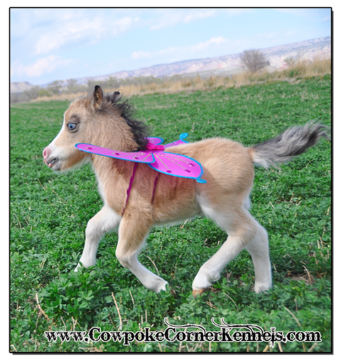 Miniature-horse-with-wings 0878