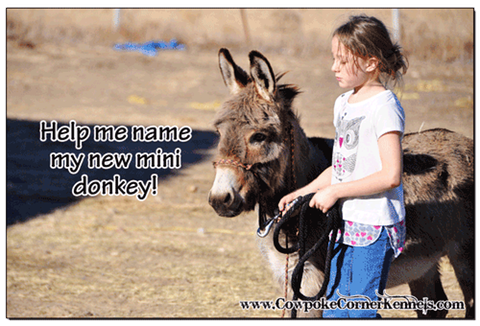 Name-the-Donkey