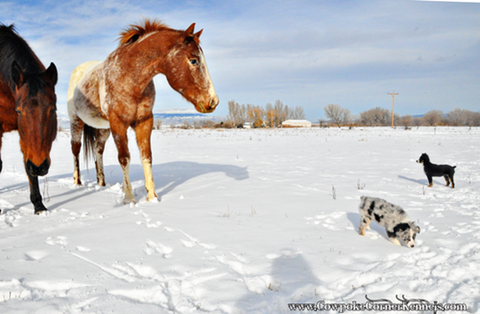 Pups-and-horses