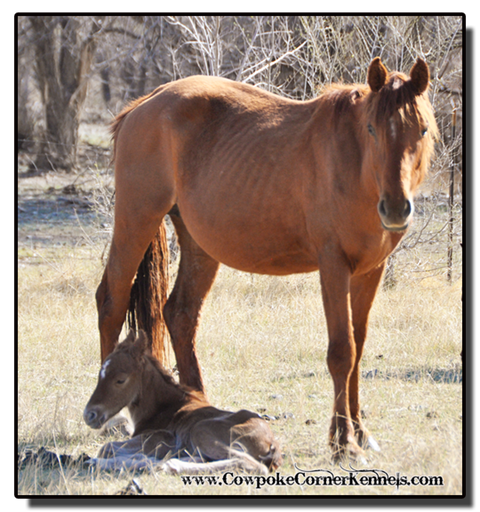 Red-Cat-Foal 0290