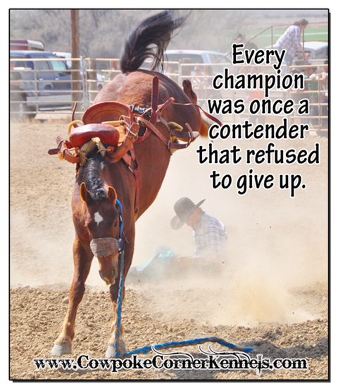 Rodeo-Champion-never-give-up 0361