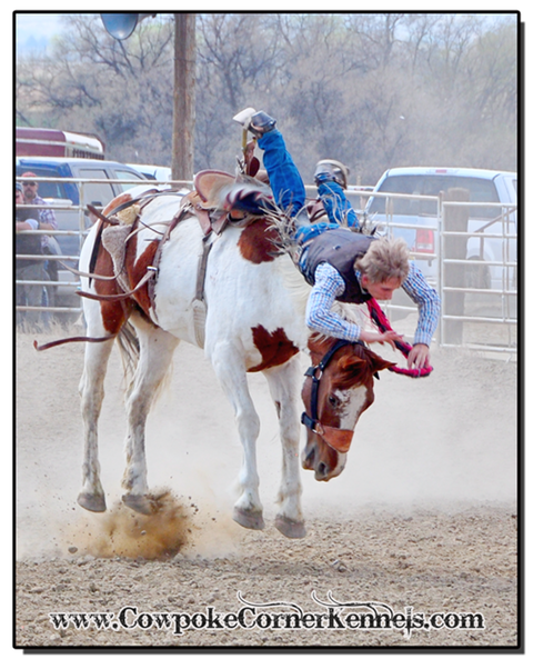 Saddle-Bronc-nose-dive 0235