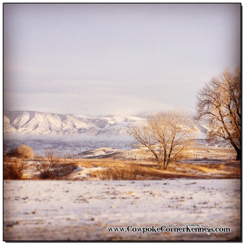 Winter-in-Wyoming 5772