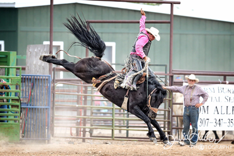 Wyoming-Bucking-horse 8829