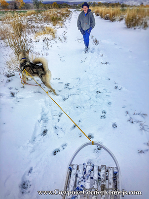 Wyoming dog sled 8173