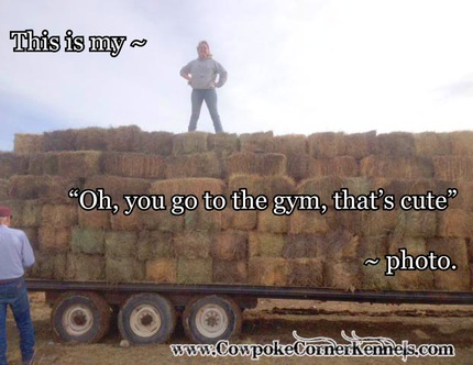 you go to the gym